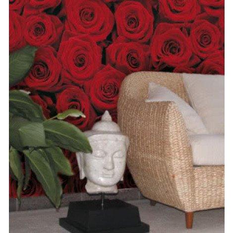 Fotobehang Roses