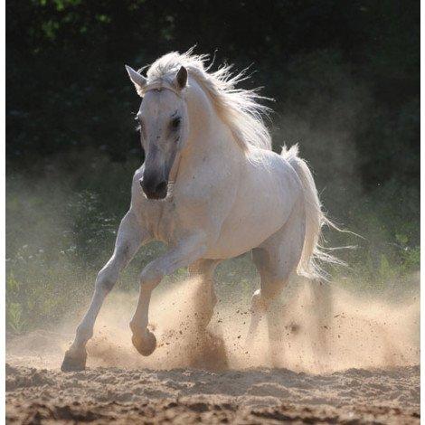 Fotobehang Paard