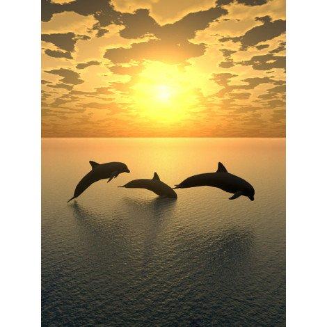 Fotobehang Dolfijn 2