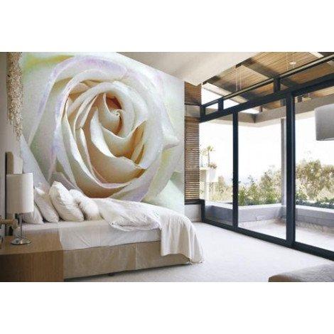 Fotobehang White Rose