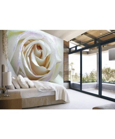Fotobehang White Rose