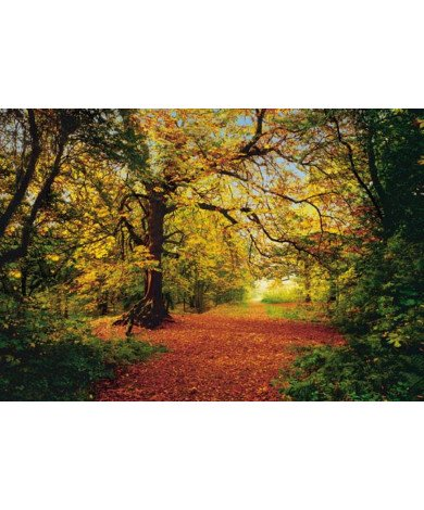 Fotobehang Autumn Forest Groot