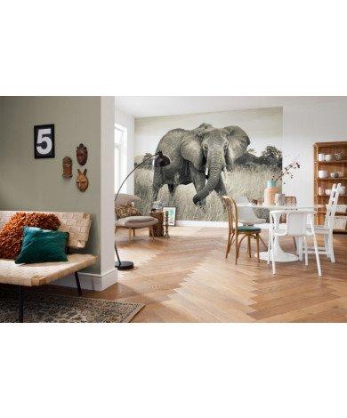 Fotobehang Elephant