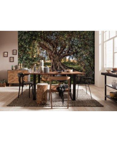 Fotobehang Olive Tree